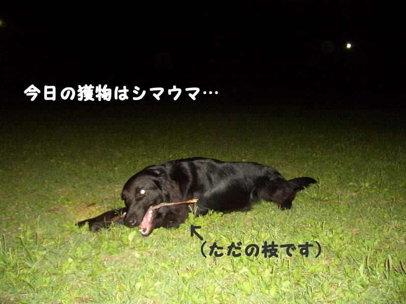 f0098338_18483938.jpg