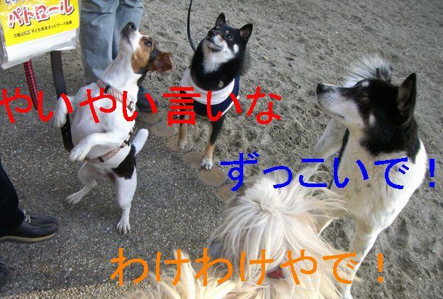 f0053952_2028269.jpg