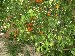 オレンジの季節_b0107003_2358537.jpg