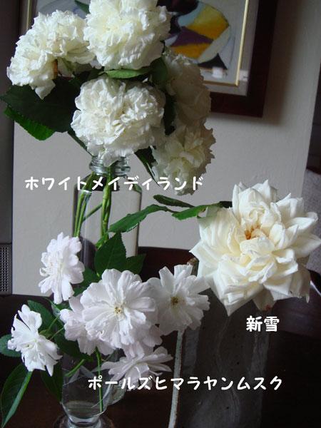 f0057006_13393050.jpg