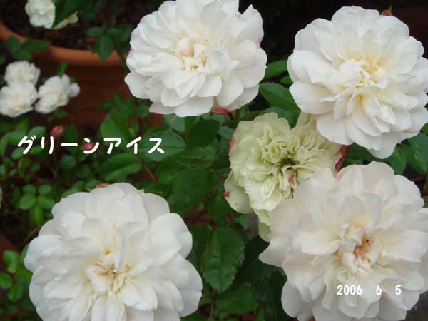 f0057006_13394884.jpg