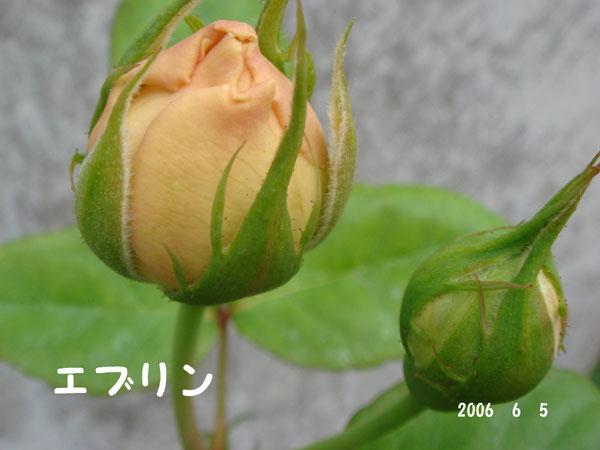 f0057006_1340263.jpg