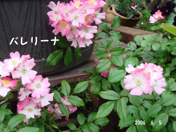 f0057006_13403272.jpg