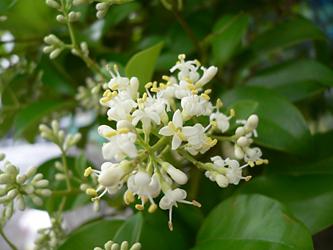 白い花 06-11_c0069048_703898.jpg
