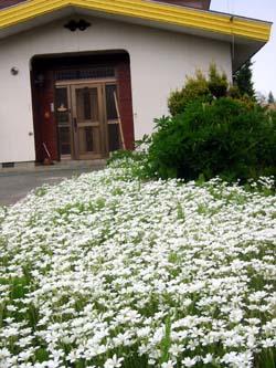 もうすぐ花の季節_f0096216_1850271.jpg