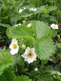 もうすぐ花の季節_f0096216_18552730.jpg