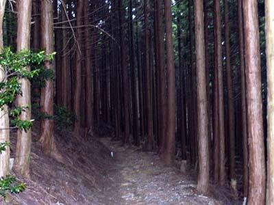 和泉葛城山へ(2)_c0024167_8505668.jpg