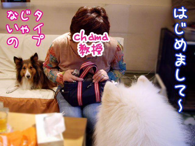 国際長毛犬種学会_c0062832_1531633.jpg