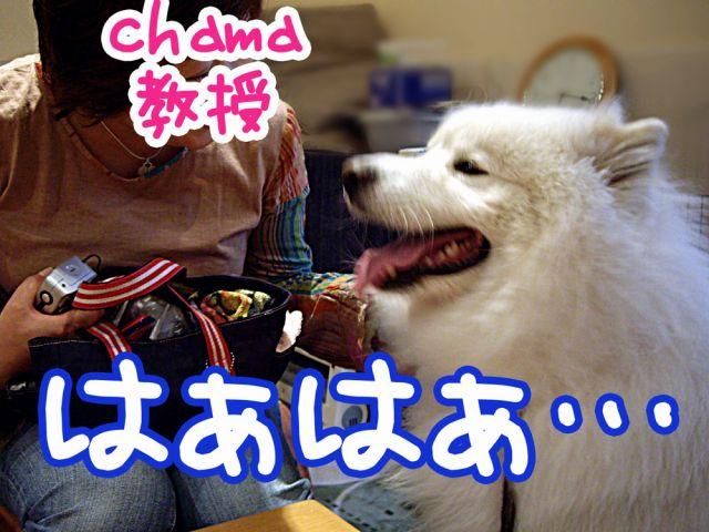 国際長毛犬種学会_c0062832_1543369.jpg