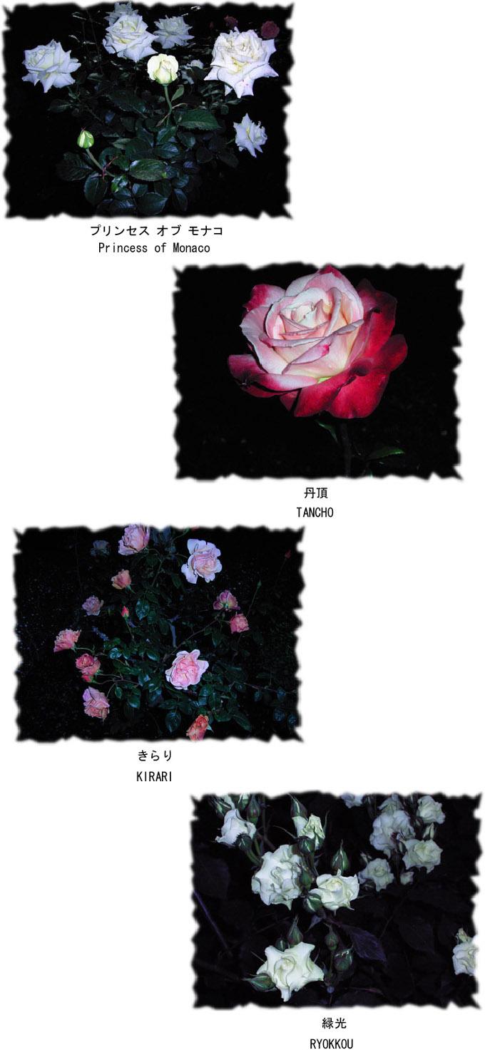 b0029036_14171963.jpg
