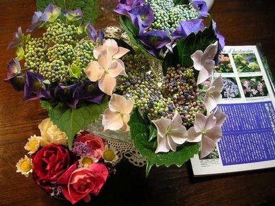2006.6.7薔薇と紫陽花と愛ちゃん_f0060461_19574295.jpg