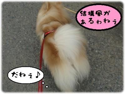 b0078073_130115.jpg