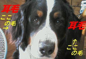 b0090201_9593061.jpg