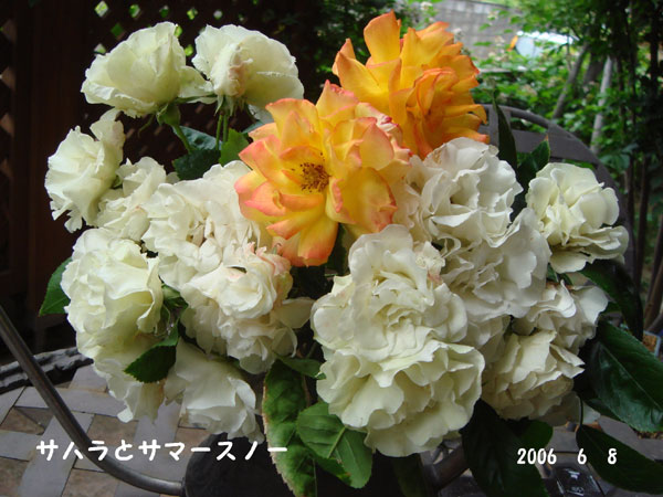 f0057006_145696.jpg
