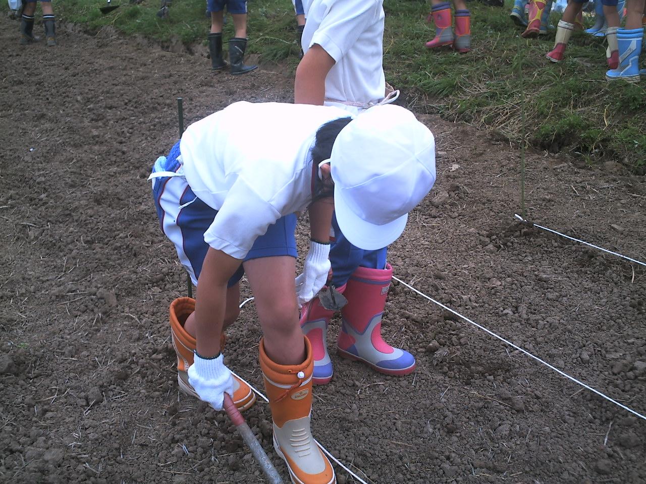 北新庄小学校の3年生もがんばって種まき!_e0061225_15594734.jpg