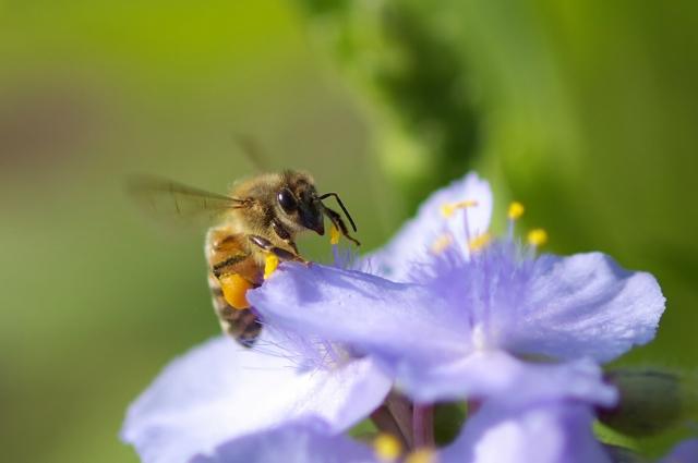 ミツバチ・2_f0018464_220530.jpg
