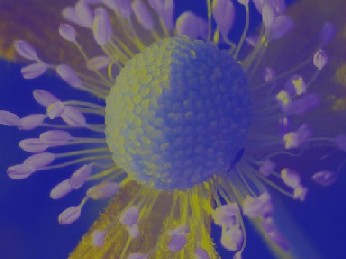 色 彩_e0003966_21502086.jpg