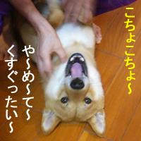 b0057675_1103097.jpg