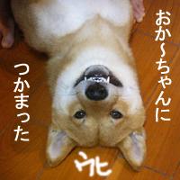 b0057675_110720.jpg