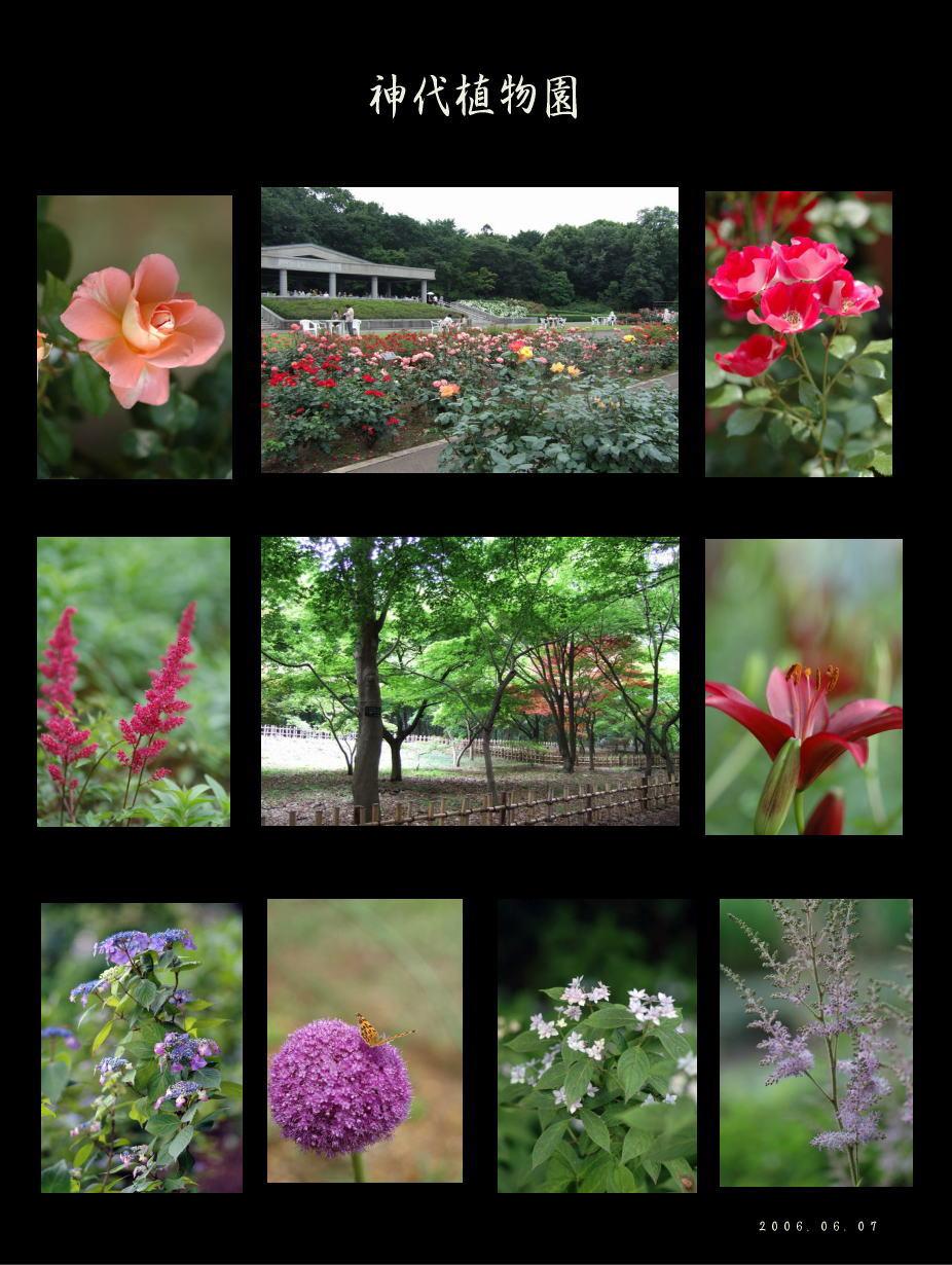 神代植物園&井の頭公園_f0012718_1572571.jpg