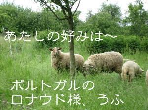 b0086136_693081.jpg