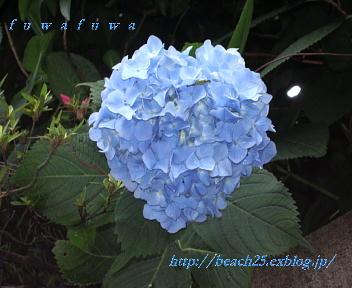 b0088039_20361150.jpg