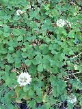 「四つ葉のクローバー、見つからないかしら?」_f0099147_022374.jpg