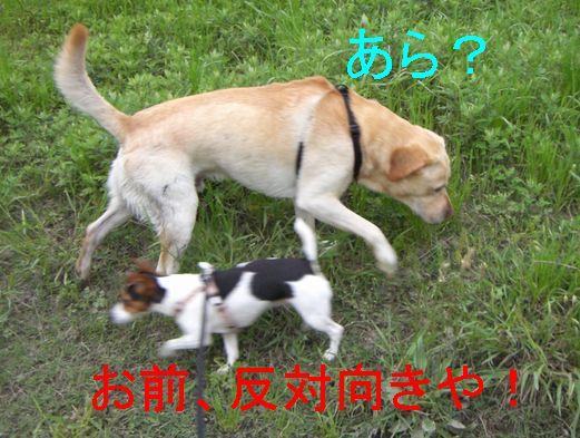 f0053952_1085180.jpg
