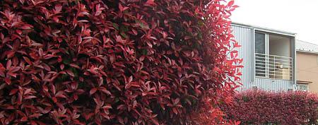 中野G邸 植物と住宅_d0017039_21293361.jpg