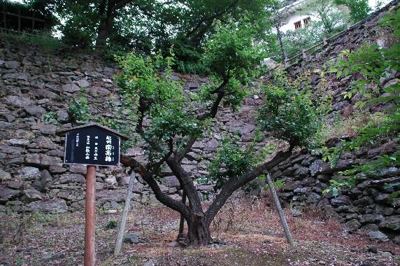天守閣への登り口 ( 表坂 )_b0093754_2322428.jpg