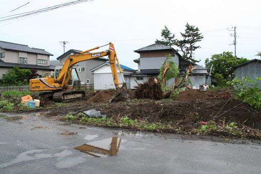 自宅近所の桜の大木が倒される_e0054299_23463337.jpg