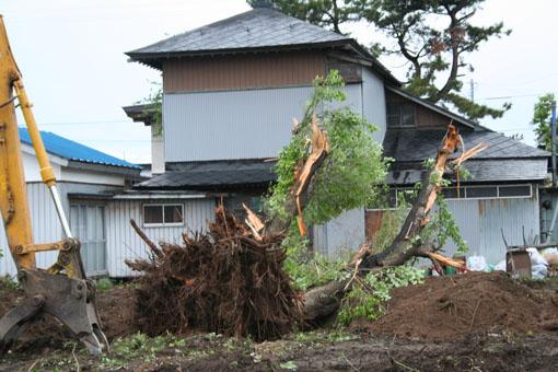 自宅近所の桜の大木が倒される_e0054299_23465378.jpg
