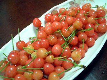 さくらんぼ収穫_f0019498_20114571.jpg