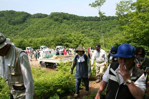 白神山地のブナの植林 1 :植林_e0054299_21233437.jpg