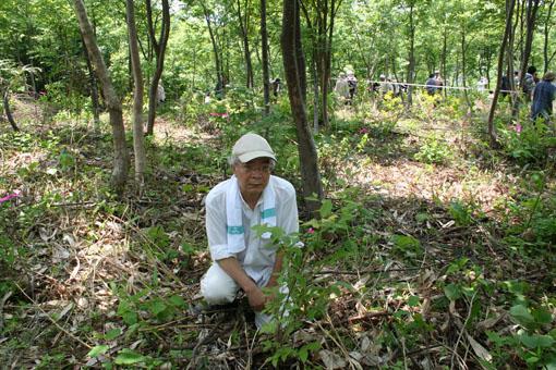 白神山地のブナの植林 1 :植林_e0054299_21315130.jpg