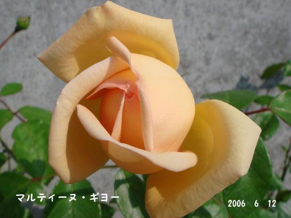 f0057006_1558291.jpg