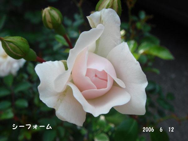 f0057006_15591615.jpg