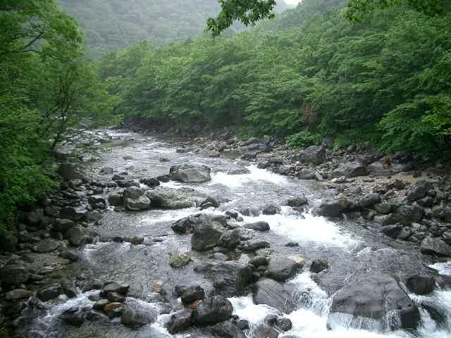 懐かしい川に行ってきました。 (しつこい雨の中、バカ二人)_e0029256_12374812.jpg