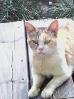 …猫…_e0051174_15522127.jpg