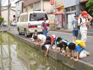 有栖川・桂川歩きとホタル観察_e0008880_17532155.jpg
