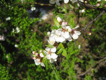 2006.March Log Garden_c0038619_2143570.jpg