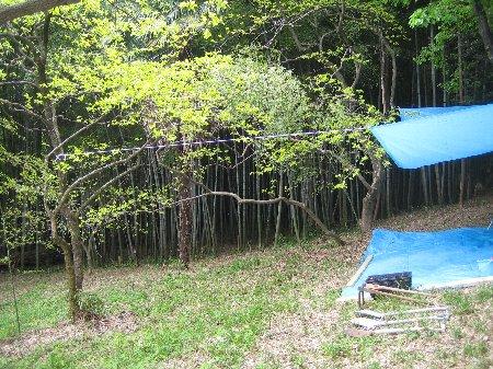 2006.Log Jizo Festival 筍掘り        ファミリーコース No1_c0038619_2310571.jpg