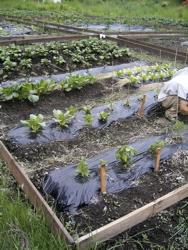 初収穫の味。_d0028589_22154059.jpg