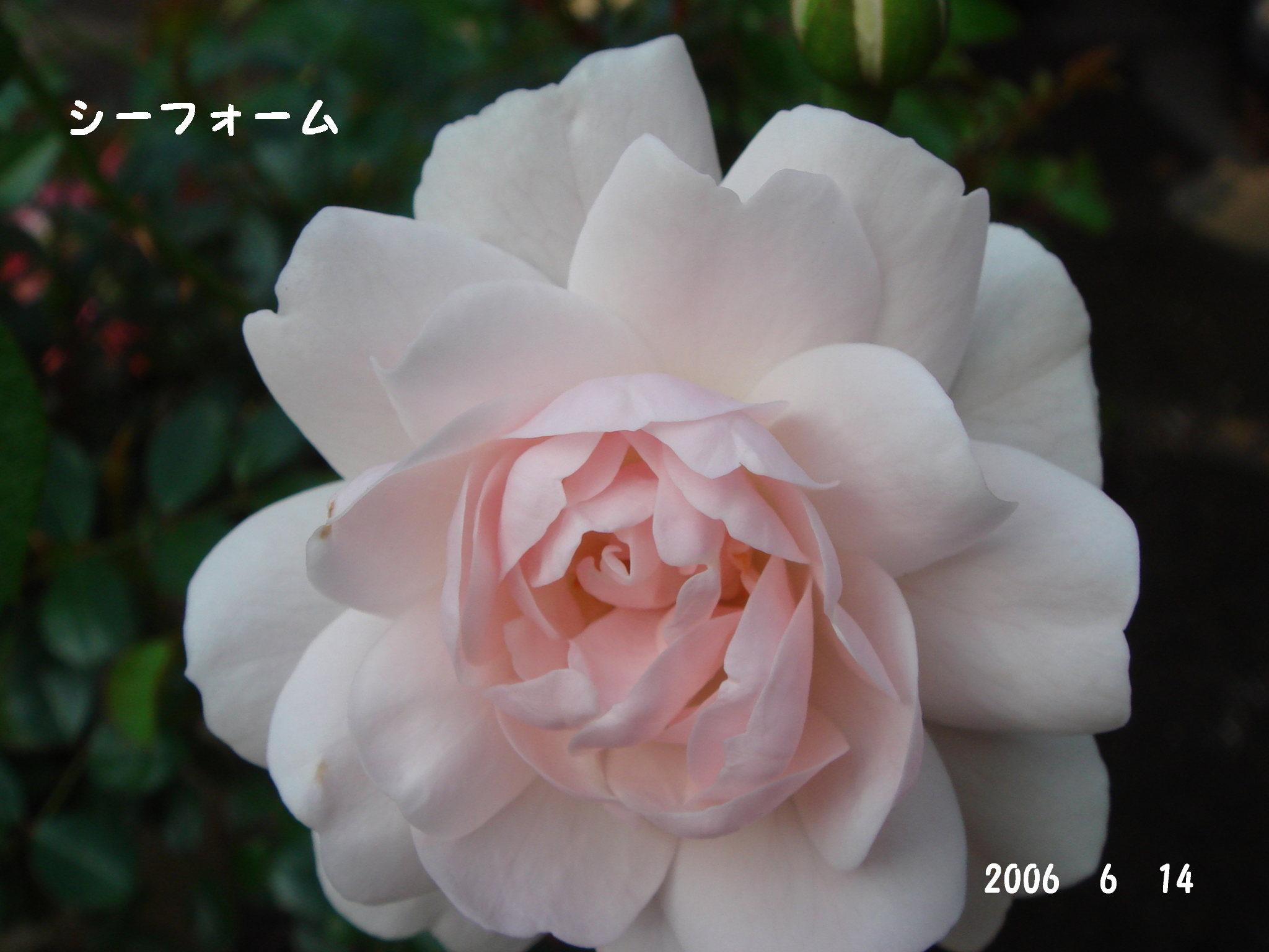 f0057006_12351413.jpg