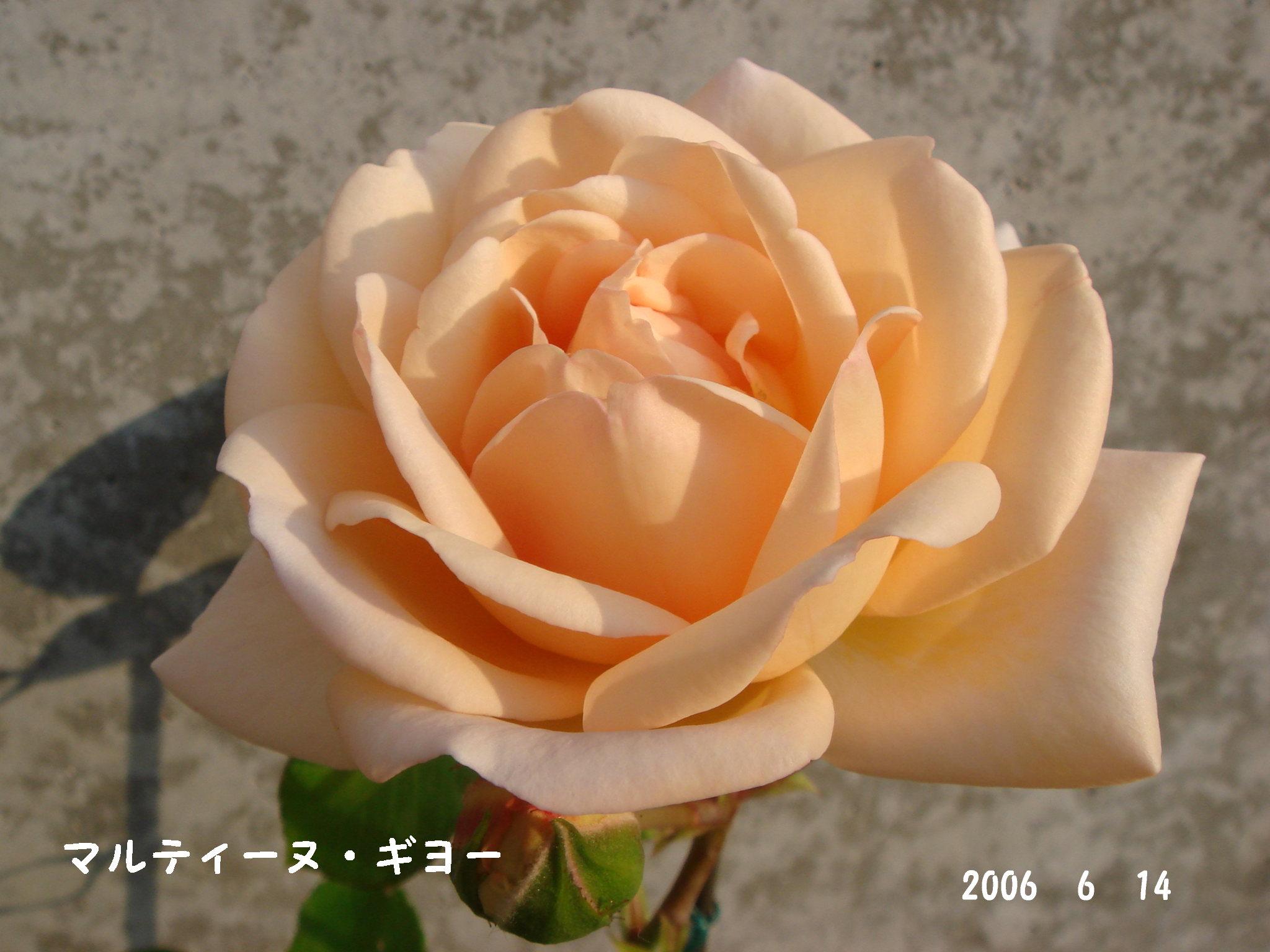 f0057006_12353784.jpg