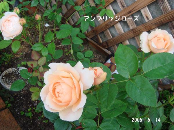 f0057006_12472054.jpg