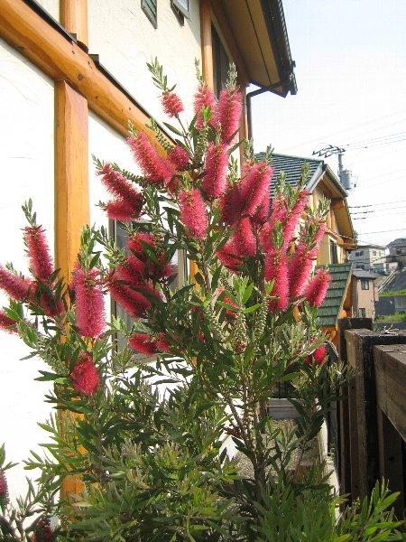 Log Garden June  No2_c0038619_0571657.jpg