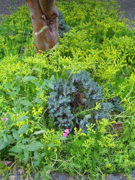Log Garden June  No2_c0038619_0573836.jpg