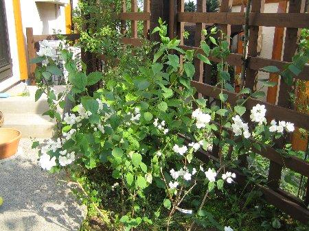 Log Garden June  No2_c0038619_0574666.jpg
