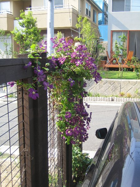 Log Garden June  No2_c0038619_057774.jpg